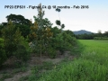 EPS31 Section 1b figtree Ck Feb 2016