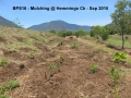 Hemmings Ck Mulching Sep 2015