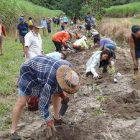 2019 Corridors Planting no.1- McDonnell Creek, Sunday August 11, 3pm